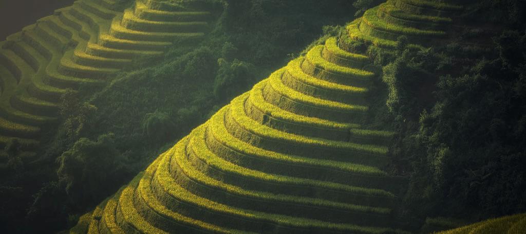 asia stepped farmland